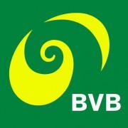 (c) Bvb.ch